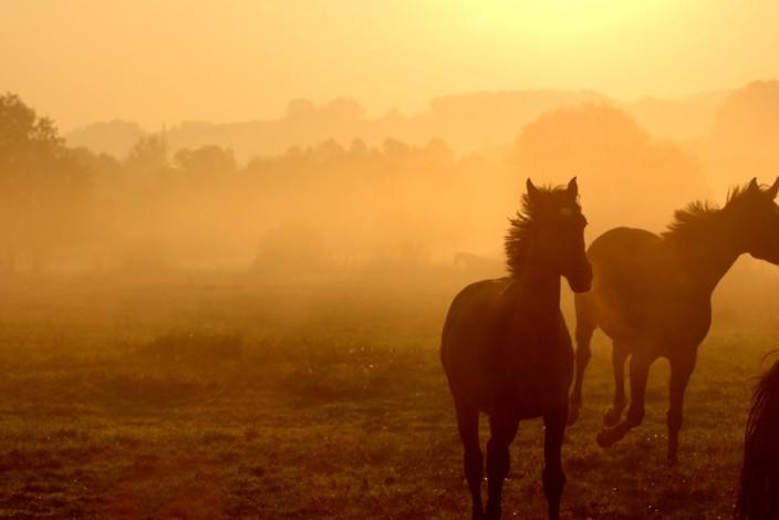 Pferdefotografie_11