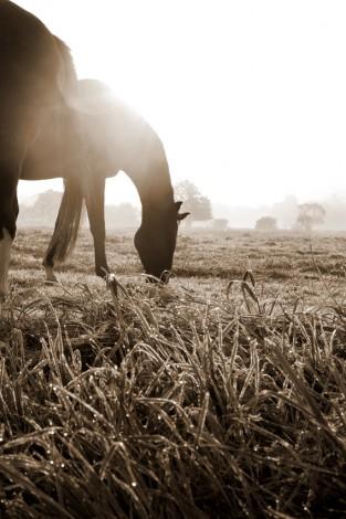 Pferdefotografie_6