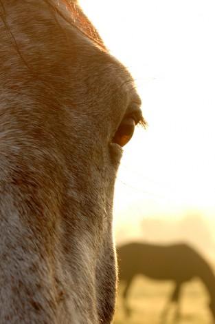 Pferdefotografie_10