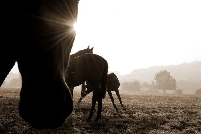 Pferdefotografie_8