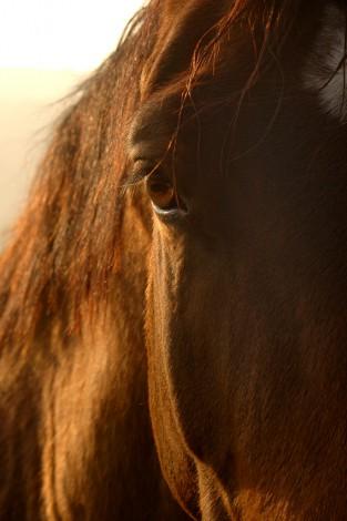 Pferdefotografie_9
